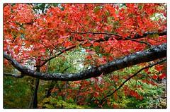 Red and Green - Rockville, MD (gastwa) Tags: park autumn color slr fall film nature leaves forest john landscape ed dc washington leaf cabin nikon scenery kodak maryland andrew 100 nikkor vr afs ektar f4g f6 1635mm gastwirth andrewgastwirth