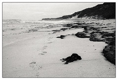 empty beach  #361 (lynnb's snaps) Tags: ocean film beach landscape coast sand tmax3200 kodak sydney footprints j8 longreef iiic 201602