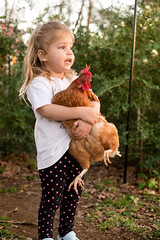 Reese Loves Her Animals (donnierayjones) Tags: chicken girl outside outdoors kid holding hug toddler child hold