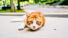 Cat (drumbunkerdragon) Tags: animal rock cat one singapore feline colorful photographer please bokeh sony kitty want ii be colourful ok fline dosmetic rx1r