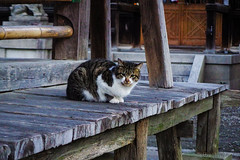 Today's Cat@2016-02-05 (masatsu) Tags: cat pentax catspotting mx1 thebiggestgroupwithonlycats