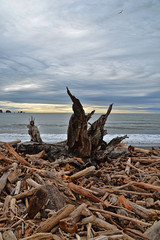 After the Storm (donmarcyp) Tags: ocean beach washington driftwood lapush rootwad