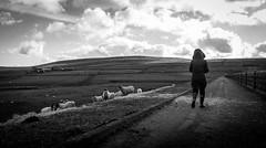 Selset . (wayman2011) Tags: people sheep dales pennines dams lightroom countydurham teesdale bwlandscapes lunedale canon50d selset wayman2011