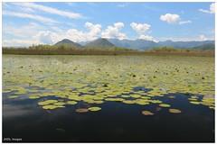 Skadar Lake, Montenegro (chtimageur) Tags: lake canon golden sigma frog 18 1835 600d montegro skadar