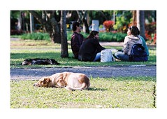 ufsc 10 (Adriana Fchter) Tags: ufsc maratona aula universidade maos cachorro pet