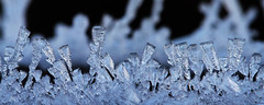 ice crystals (Lorraine1234) Tags: macro ice nature icecrystal macrophotography focusstacking