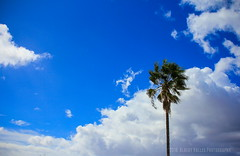 Standing Alone! ( In 2 Making Images | L.A.) Tags: losangeles noon dramaticsky losangelesskyline cloudysky elysianpark policeacademy latimes discoverla