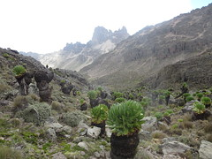 Mount Kenya trek (John Steedman) Tags: africa trek kenya afrika kenia afrique eastafrica mountkenya ostafrika 非洲 アフリカ ケニア африка afriquedelest أفريقيا кения 肯尼亚 東アフリカ شرقأفريقيا 东部非洲