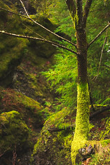 Gradient (Aaron Fredericy) Tags: plants plant tree green wet water oregon moss gorge columbiarivergorge wahclella
