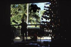 Bahamas 1988 (630) New Providence: Love Beach (Rüdiger Stehn) Tags: weihnachten weihnachtsbaum menschen dia analogfilm scan 1980s slide 1980er diapositivfilm kleinbild kbfilm analog 35mm canoscan8800f 1988 contax137md bahamas nassau lovebeach insel palmen bauwerk profanbau haus garten newprovidence amerika westindischeinseln karibik mittelamerika gambier gambiervillage thebahamas nordamerika gebäude