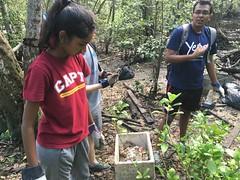 29-Env&CivSoc-World-Water-Day-LCK-Cleanup-26Mar16 (Habitatnews) Tags: mangrove capt nus worldwaterday limchukang iccs