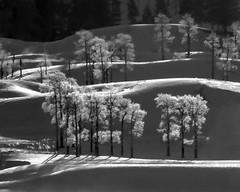 Frosty Lamar Valley Morning (Patty Bauchman) Tags: nature landscape hoarfrost yellowstonenationalpark winterscene lamarvalley