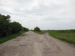 DSCN5133