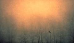 Back home (Edita Ruzgas. Thanks for your visit.) Tags: trees sun bird colors yellow landscape nikon colours artistic pastel orrange edita d7200 ruzgas