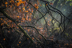 Tangled (Vemsteroo) Tags: city morning autumn trees winter light wild urban cold green nature leaves composition sunrise woodland frozen birmingham moody foreboding branches olympus messy sunburn westmidlands looming omd mkii acocksgreen 1250mm em5 edgelands