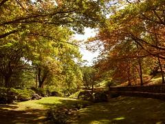 The Glades (bsam4109) Tags: autumn trees colour garden landscape australia bluemountains nsw everglades leura glades