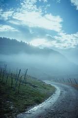 Morgennebel (steffens.jens) Tags: fog landscape deutschland nebel sony snapshot himmel wolken 7 alpha landschaft morgen reben weg mosel wein trauben rheinlandpfalz dunst schnappschuss weinberge 2870 bullay ilce sichtweite hochformat a