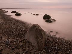 Y4016342.jpg (Tini X) Tags: ostsee meer see urlaub schwan strand steine