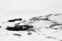 (M.Raines) Tags: winter film mediumformat kodak tmax 400 6x9 minimalsim fujicagw690