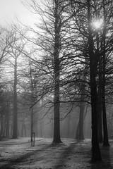 Morning haze (ParadoX_Design) Tags: trees sun sunlight white black early haze utrecht ray shadows beam trunks groeneveld baarn