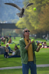 Juggle (swong95765) Tags: park man bird fun concentration seagull gull juggling skill bals