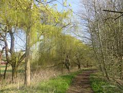 32-IMG_3113 (hemingwayfoto) Tags: arboretum baum weg trauerweide