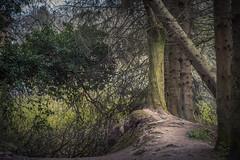 Falling Away (Dylan Nardini) Tags: uk trees nature scotland woods nikon lanarkshire southlanarkshire d810