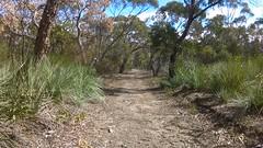 Para Wirra 15 (WEA Ramblers) Tags: hiking australia bushwalking southaustralia parawirra yattalunga fayharding