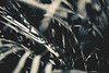 Wonderer #24 (rhendi.rukmana) Tags: life sky blackandwhite sunlight abstract nature monochrome canon wonder leaf bnw wonderer