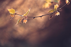 Pionera (Gure Elia) Tags: tree hoja primavera nature leaf spring branch dof bokeh rama pamplona pdc nafarroa canoneos5dmarkii samyang135f2