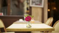 Little vase (Caropaulus) Tags: flowers stilllife blur vintage table 50mm spring minolta chairs bokeh seat salt terrasse gerbera printemps rokkor