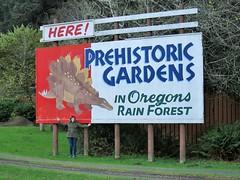 HERE! PREHISTORIC GARDENS IN Oregons RAIN FOREST (rickele) Tags: billboard oregoncoast roadsideattraction stegosaurus themepark highway101 portorford paintedsign prehistoricgardens roadsideamericana dinosaurpark currycounty usroute101