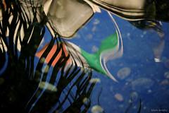 bandiera italiana (Silvio Arnello) Tags: parco lago italia liguria genova acqua colori italiana riflesso bandiera arenzano