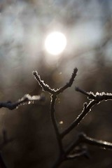 Framing the sun - HBW! (Jo Evans1) Tags: winter light gardens wales wednesday bokeh branches frosty national botanic hbw