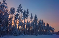 Trees (SSBBSBSSBSBS) Tags: morning blue trees winter red sky snow cold color colour tree ice nature finland skyscape landscape view natural outdoor snowy timber wildlife january sunny scene evergreen scandinavia scape europeanskyscapes