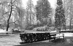 Anyone around? (Ernst_P.) Tags: park schnee winter snow austria tirol sterreich hiver nieve sw invierno neige tyrol innsbruck hofgarten aut