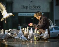 Inge Hoogendoorn (ingehoogendoorn) Tags: seagulls bird birds gull gulls streetphotography vogels denhaag feedingthebirds feed thehague meeuw meeuwen vogel birdman birdfeeding straatfotografie hofplaats vogelsvoeren