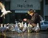 © Inge Hoogendoorn (ingehoogendoorn) Tags: seagulls bird birds gull gulls streetphotography vogels denhaag feedingthebirds feed thehague meeuw meeuwen vogel birdman birdfeeding straatfotografie hofplaats vogelsvoeren