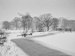 Winter Has Arrived (CVerwaal) Tags: nyc winter blackandwhite snow centralpark turtlepond olympusem5 lumixgvario1235f28