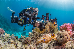 Diver Photographing Anemone Fish (davidmcbridephotography) Tags: winter fish coral photography nikon photographer mini anemone workshop zen dome diver padi cyclone barge warmer the scubatravel nauticam d7200 duxys duivemaster