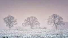 The three trees (Stefan Sellmer) Tags: trees winter snow fog germany de landscape deutschland schleswigholstein strande