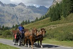 pulling ahead (Riex) Tags: horses animal cheval schweiz switzerland carriage suisse horsedrawn svizzera a100 engadine chevaux amount graubnden grisons caleche graubunden valfex sal1680z minoltaamount carlzeisssonyf35451680mm fexcrasta variosonnartdt35451680
