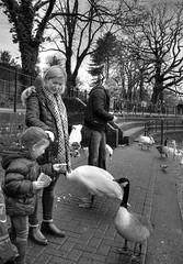 Feeding the birds, Roath Park Lake (All I want for Christmas is a Leica) Tags: people monochrome outdoors geese blackwhite wildlife cardiff ducks monochromatic roathpark outabout roathparklake roathparkcardiff panasoniclumix14mm panasoniclumixgf5