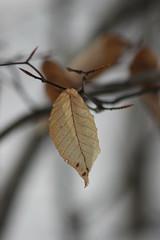 Leaf (historygradguy (jobhunting)) Tags: ny newyork leaves leaf upstate dutchesscounty hudsonvalley beekman lagrangeville