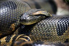 snake (محمد بوحمد بومهدي) Tags:
