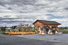 Amish farm (Eduard Moldoveanu Photography) Tags: old horses usa white green tourism nature beautiful dutch grass horizontal clouds rural america vintage landscape outdoors evening countryside wooden moody carriage outdoor pennsylvania farm country pumpkins dramatic scooter farmland amish hills pa homemade haloween lancaster fields silos produce farmer agriculture lancastercounty buggy sheds amishcountry farmstand