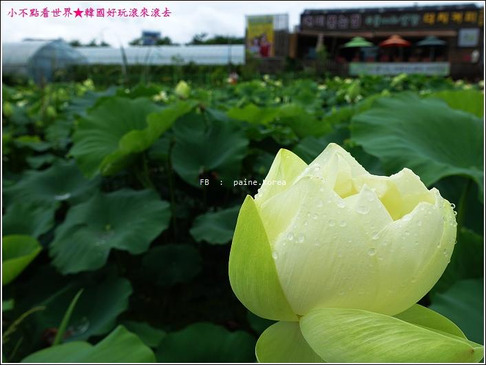 京畿道 兩水頭 洗美苑 (57).JPG