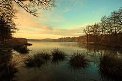 Good morning! (M a u r i c e) Tags: trees winter holland nature water netherlands landscape pond efs1022mm