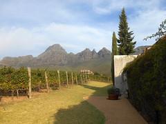 Uva Mira (RobW_) Tags: southafrica march saturday vineyards uva mira stellenbosch westerncape 2016 05mar2016