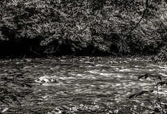 Little River near Townsend, TN (TMink) Tags: trees creek river carolina monochrone tmink